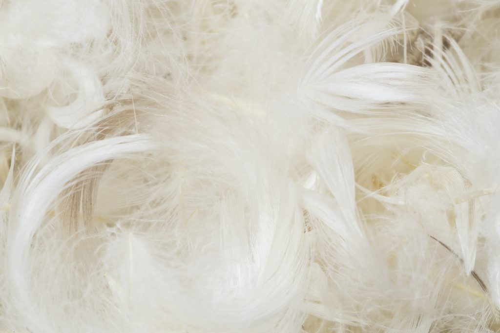 White feathers pillow - pillow buying guide
